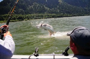 Guided fishing trips for Salmon,Sturgeon,Steelhead,Walleye with pro Oregon fishing  guides