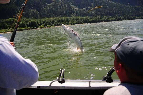 All items tagged as oregon sturgeon fishing at or wa for Oregon salmon fishing