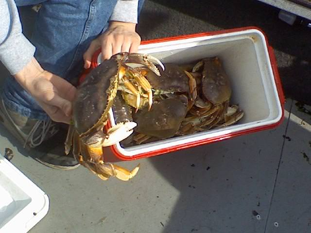 Tillamook bay 2011 or wa fishing guide marvin henkel for Crab fishing oregon